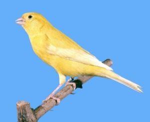 intensive lipochrome yellow