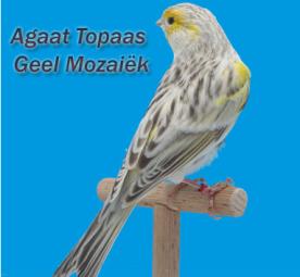 MosaicYellowAgateTopazCock