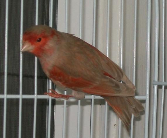 red Brown_pastel
