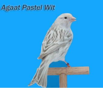 WhiteAgatePastel
