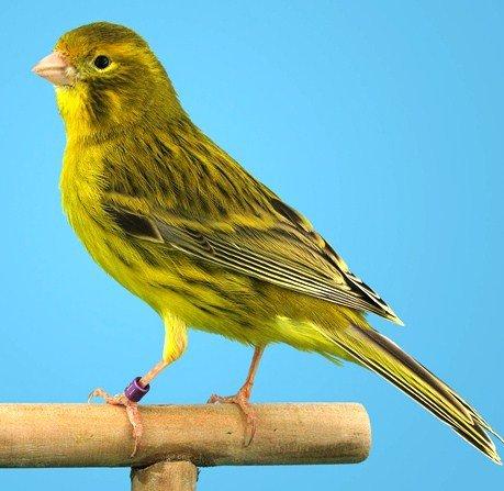 Yellow Inensive Agate