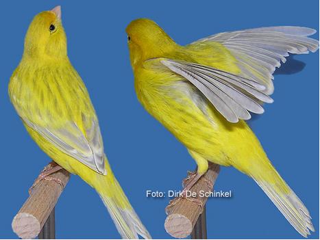 YellowAgateOpals