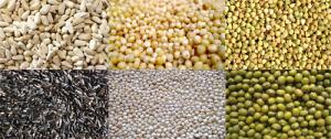Hasil gambar untuk biji bijian pakan burung