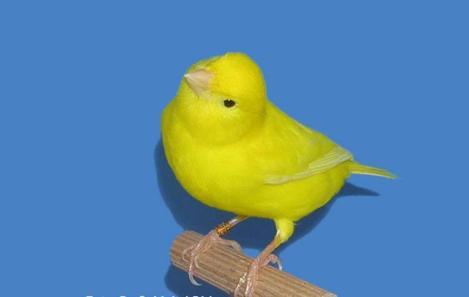 Intensive Yellow