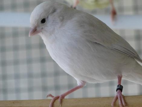 White brown opal
